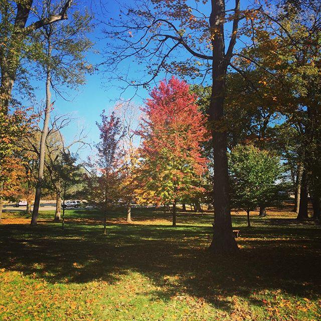 Illinois Fall..